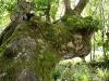 Vieil arbre dans la vallée