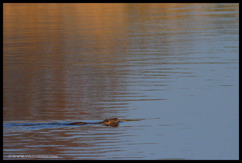 Petite nage
