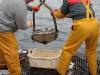 Vedette océanographique Albert Lucas : remontée de la benne
