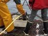 Vedette océanographique Albert Lucas : ouverture de la benne