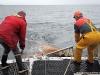Vedette océanographique Albert Lucas : la remontée du chalut