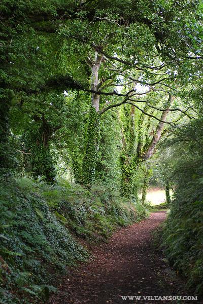 Le chemin vers la vallée